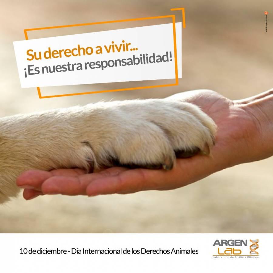 10 de Diciembre Día Internacional de los Derechos de los Animales